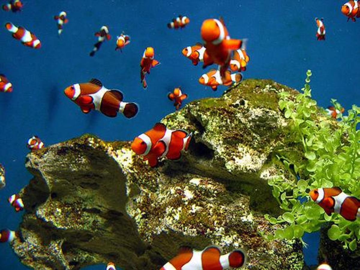 A hard element like a rock structure is a nice, natural choice for your aquarium.