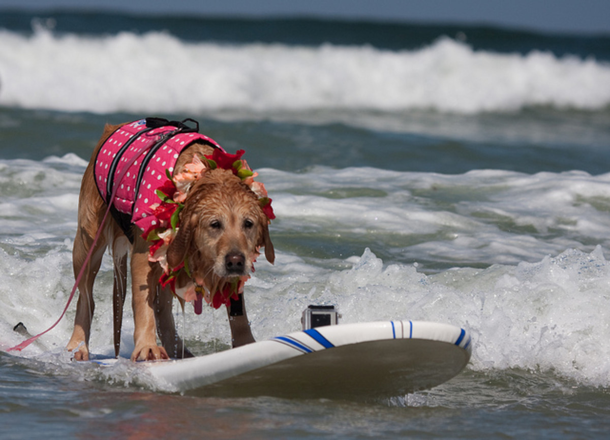 Dogs with Brazilian names should learn how to surf.