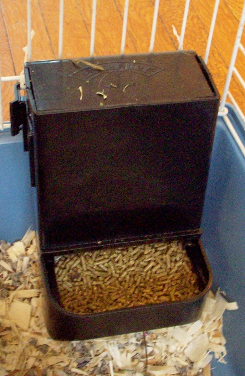 Guinea Pig Food Trough/Feeder