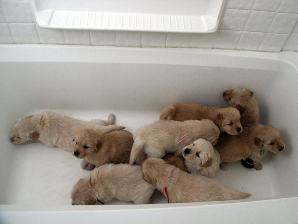 Of course dogs can whelp anywhere--even a bathtub!