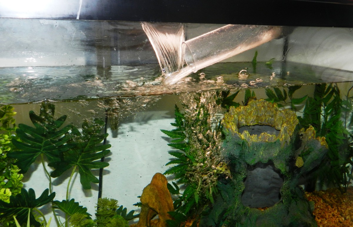 Water changes are an important part of aquarium care that can't be overlooked.