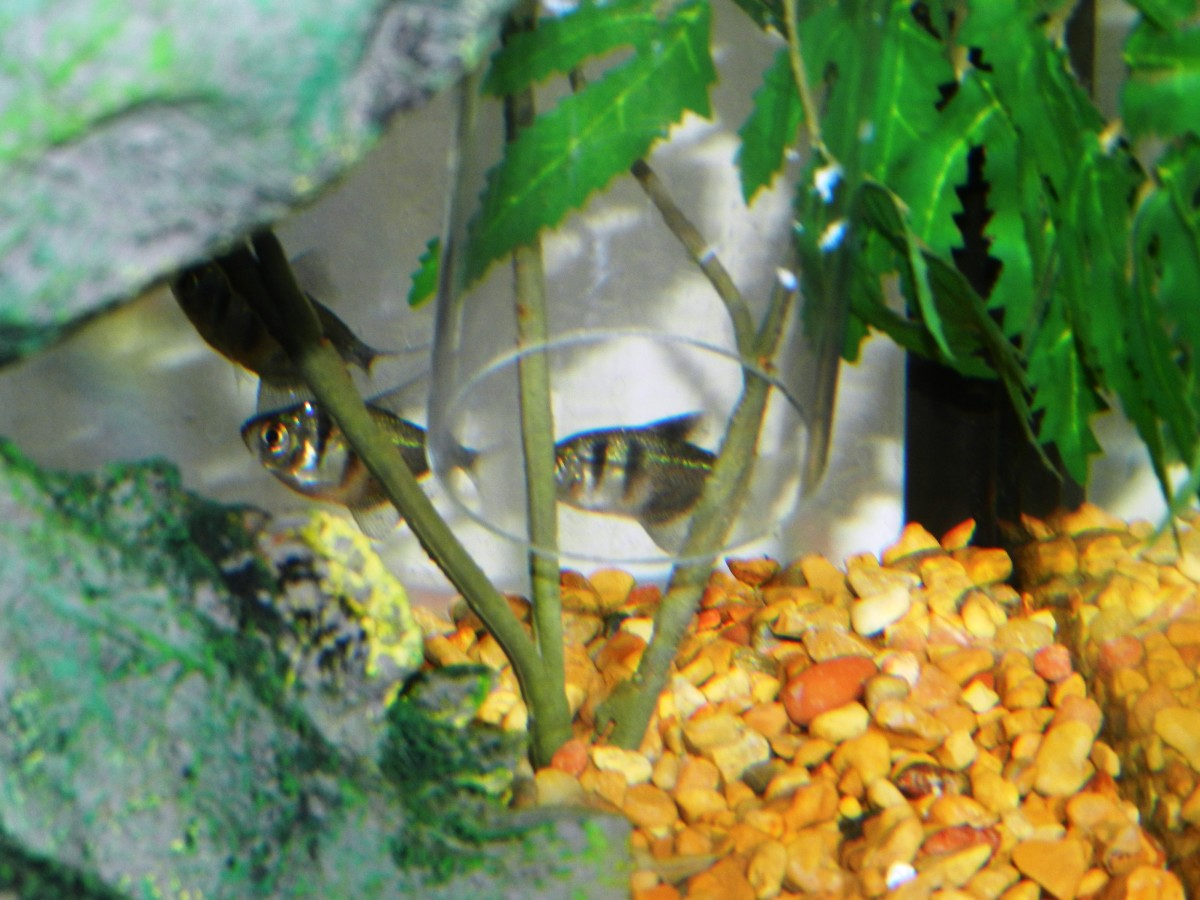 If you have little fish in your tank you'll want to keep an eye on them so they don't accidentally get stuck in the tube.