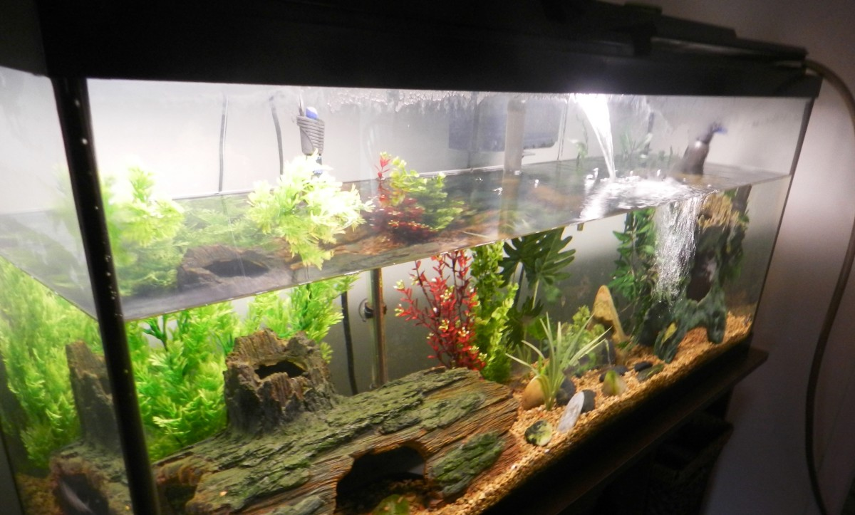 How to change the water in your freshwater aquarium the for Spring water for fish tank