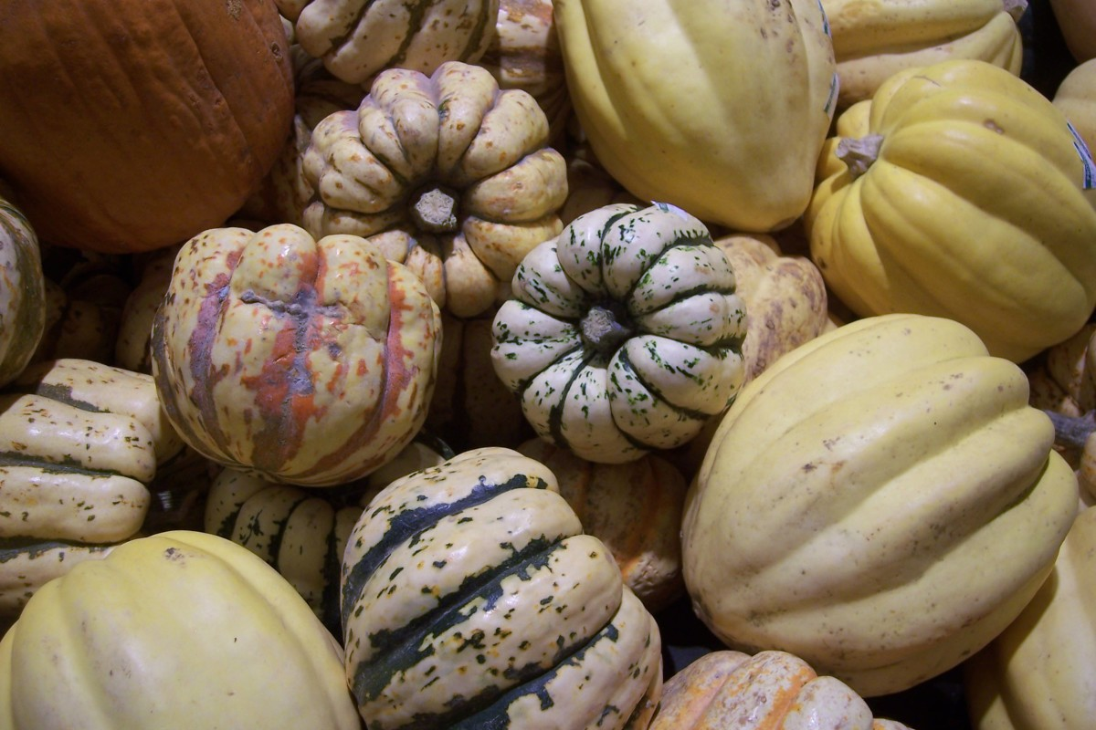 Squash is a healthy choice for many animals.