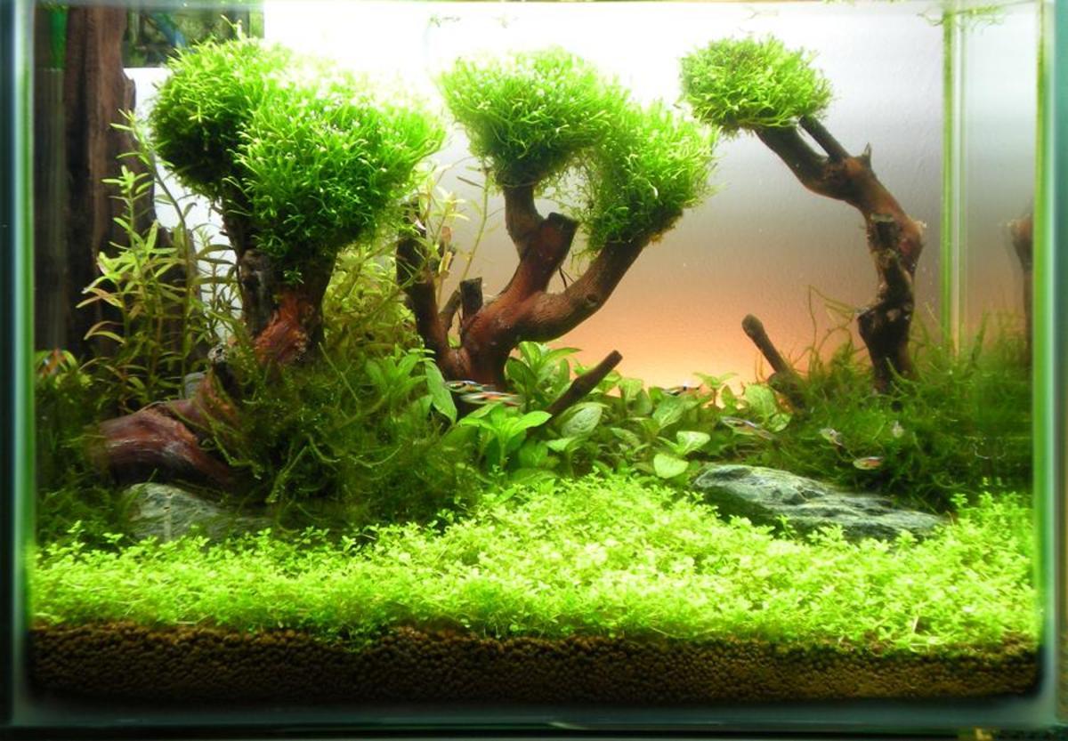 Here's a lush, green vivarium.