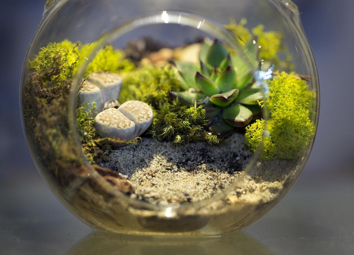Here's a tiny vivarium.