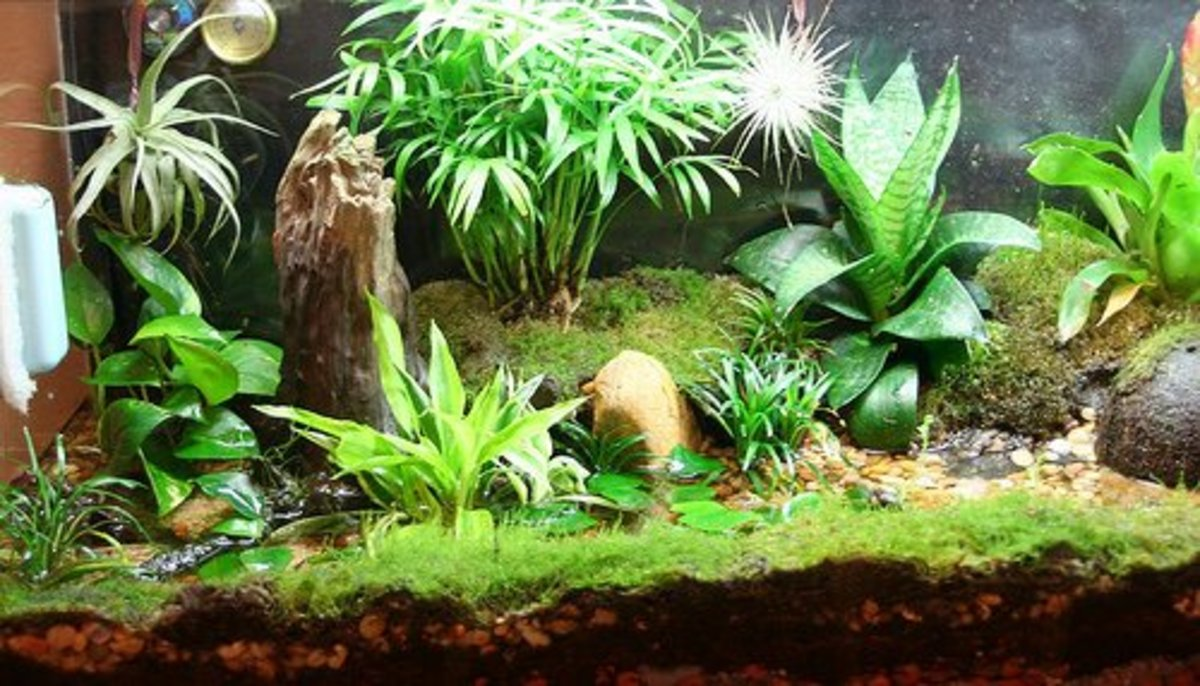 You want your vivarium to display both healthy plants and animals.
