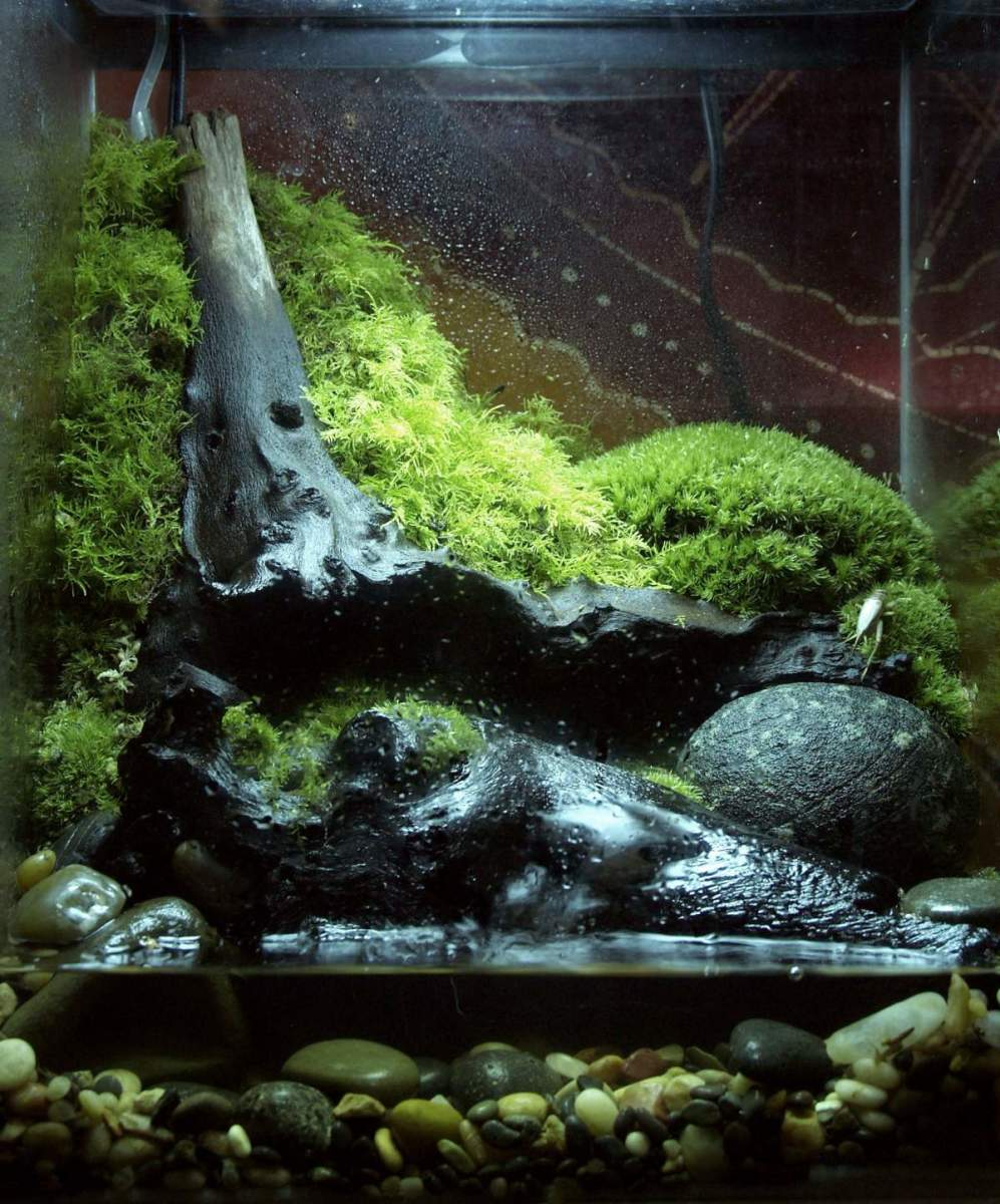 Master vivarium tank.