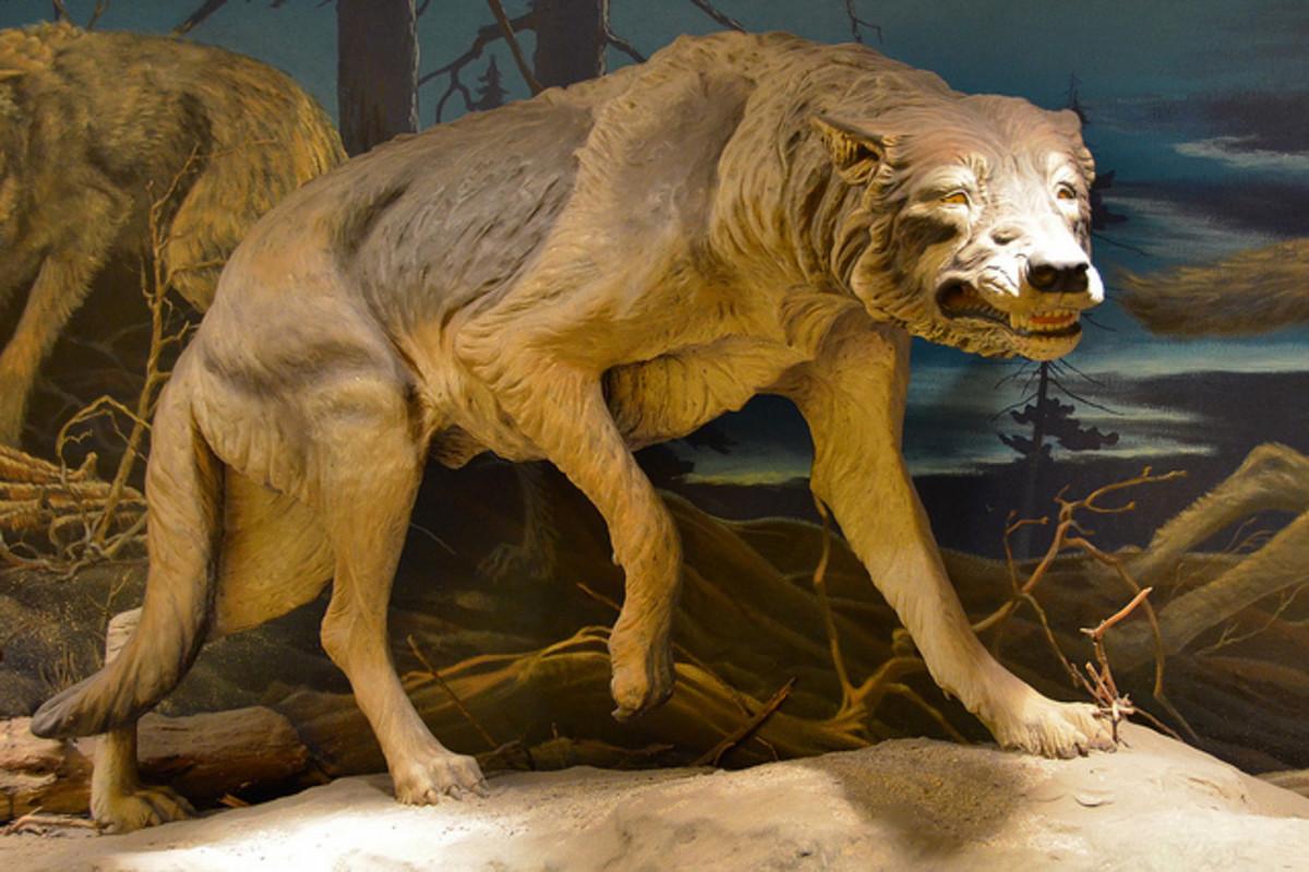 A replica of the prehistoric Dire Wolf at the La Brea tar pits.