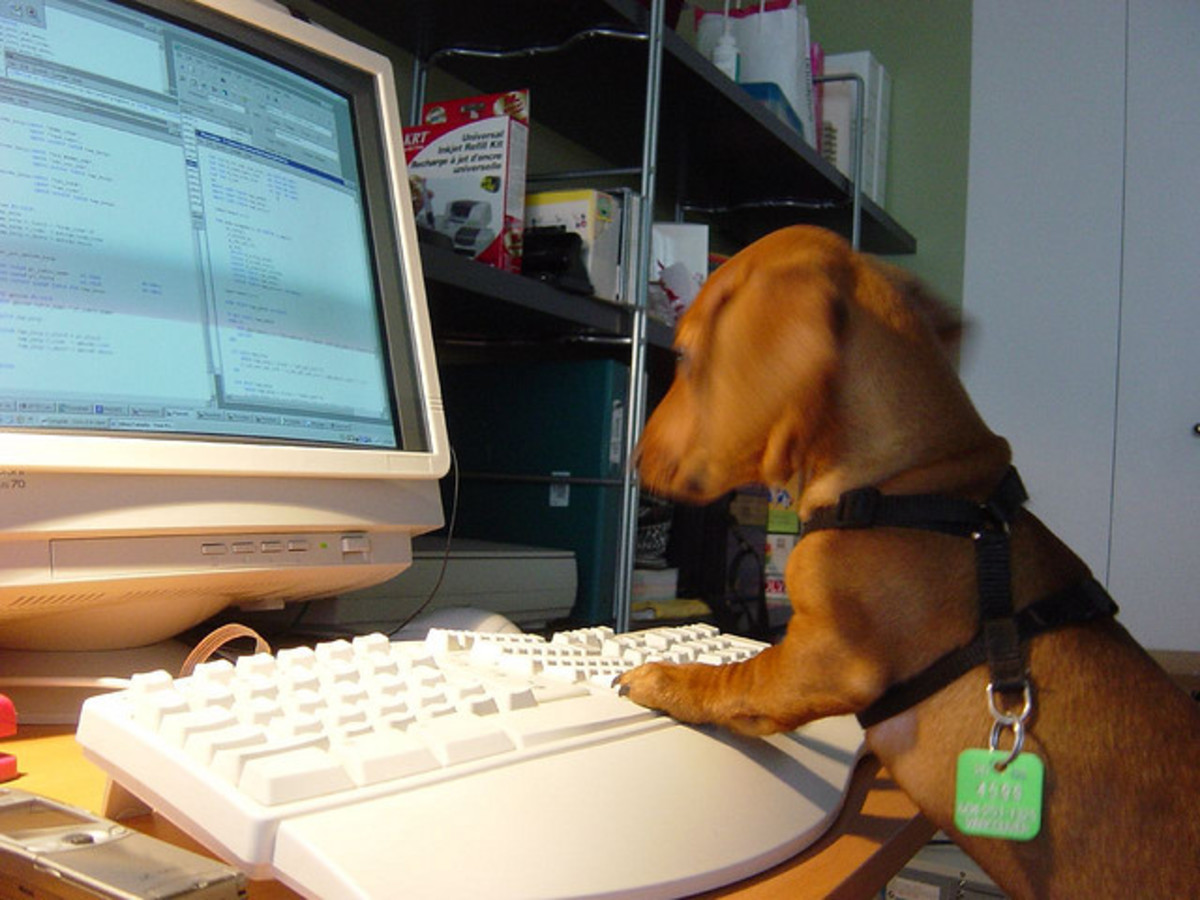 If you download a good P2P, your dog can go on the computer and select the kind of music that helps her to relax.