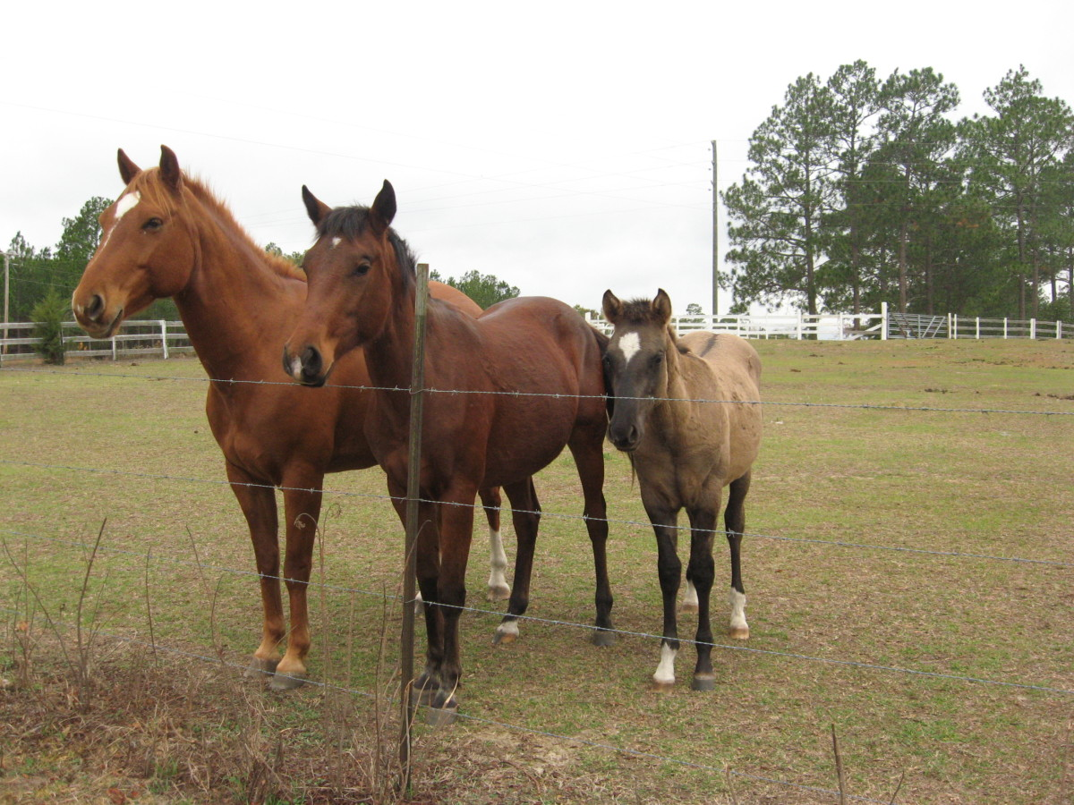 Horse Body Language reveals a lot. These guys are alert and inquisitive.