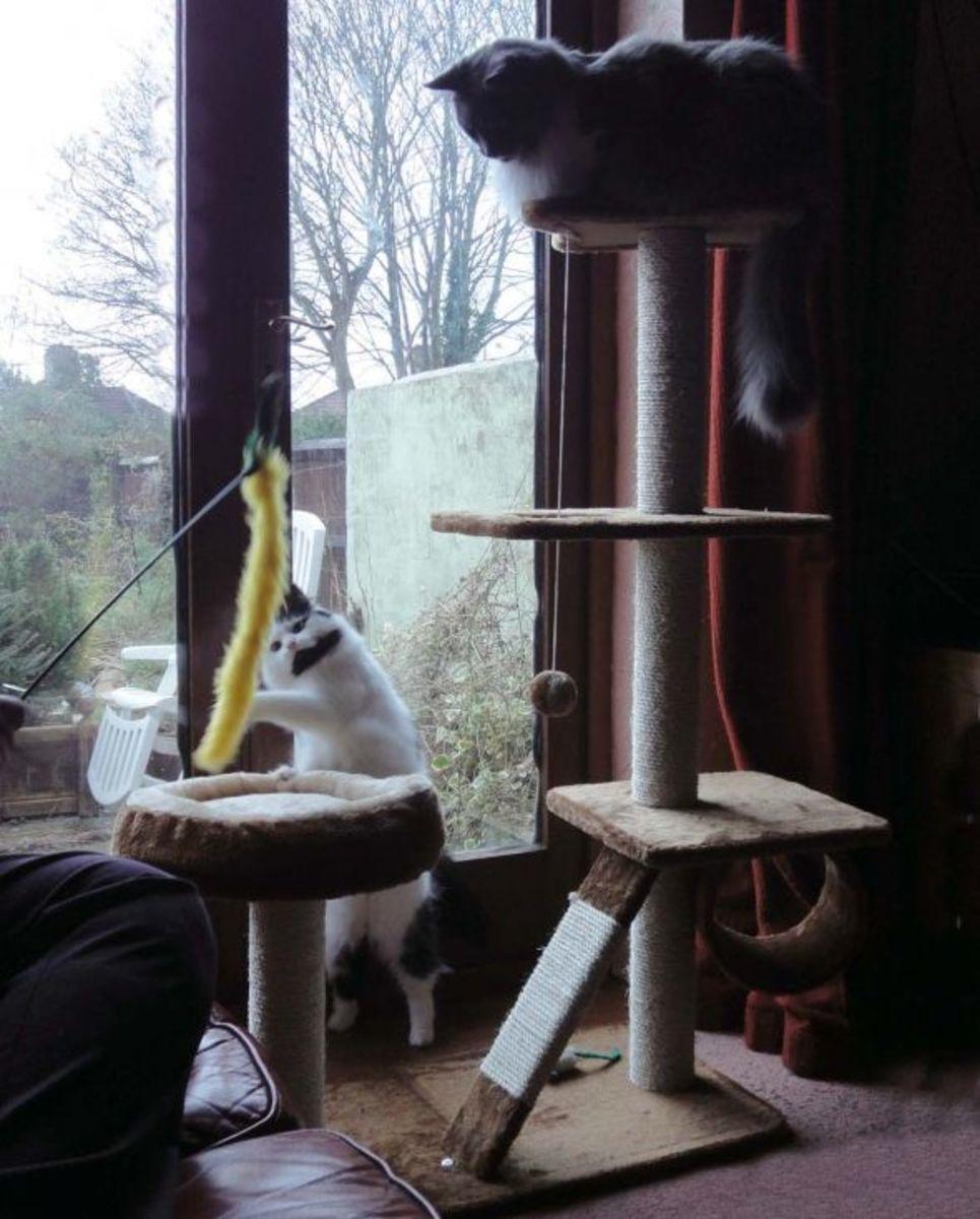 Cat Play Tree