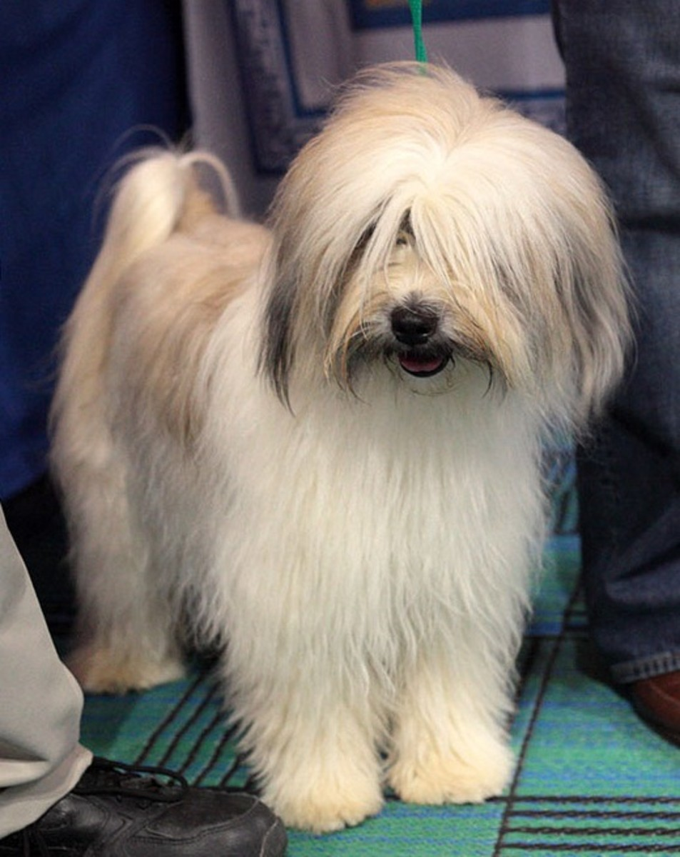 chinese-dog-names