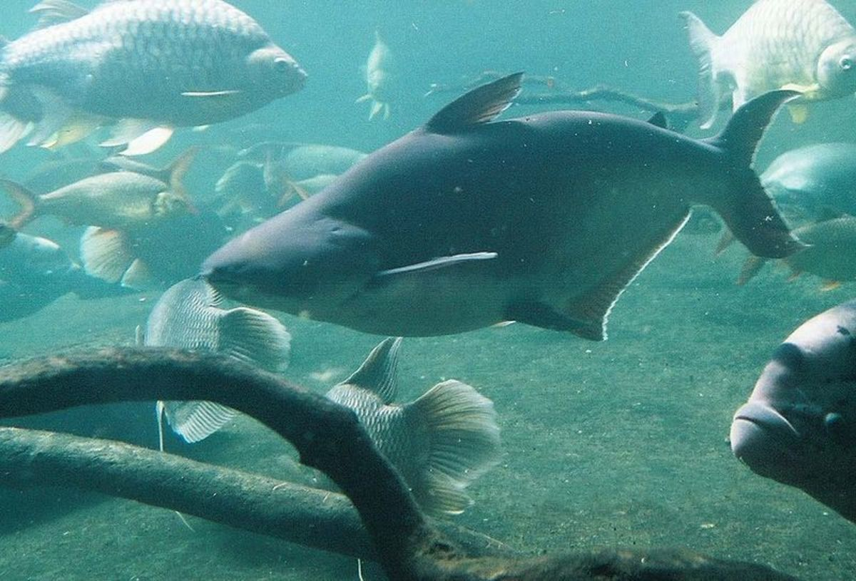 Iridescent sharks are not appropriate for home aquariums.