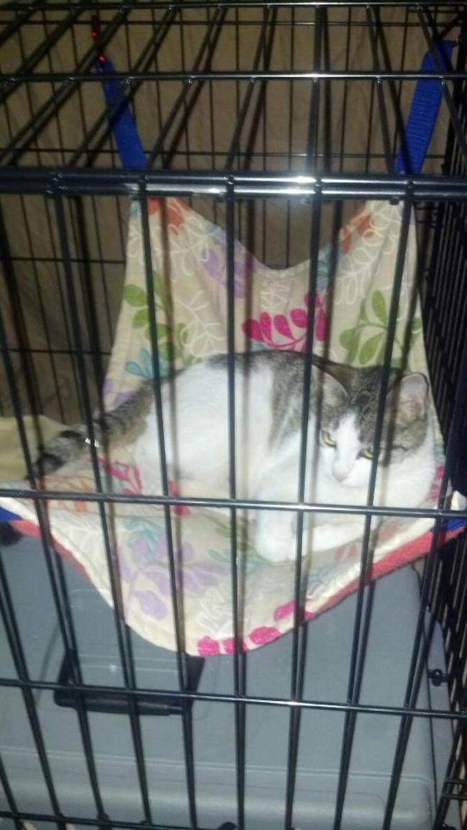 Mama Cat in Hammock