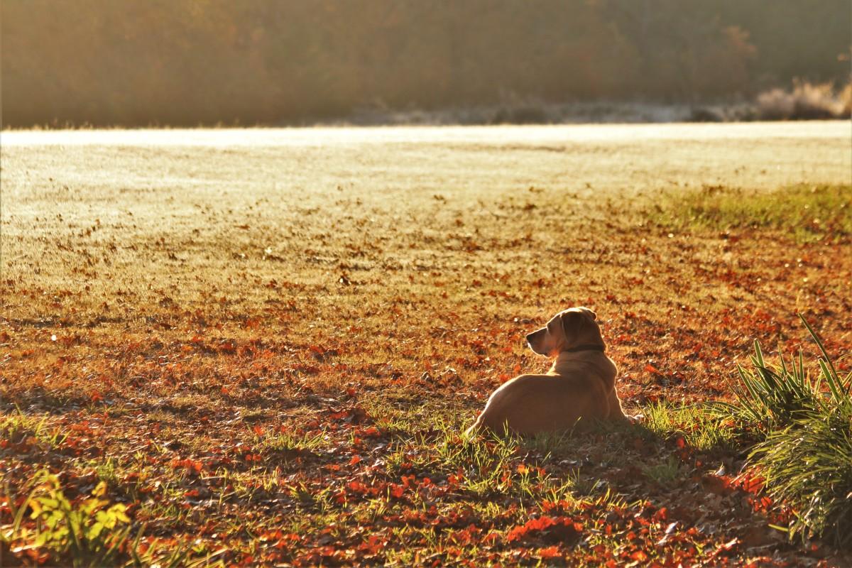 Sadie, guarding her domain at sunrise.