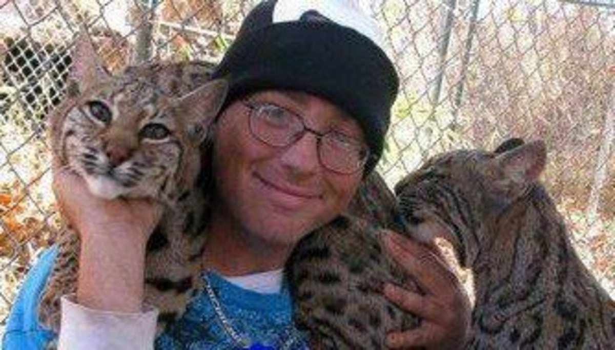 Pet bobcats and owner.