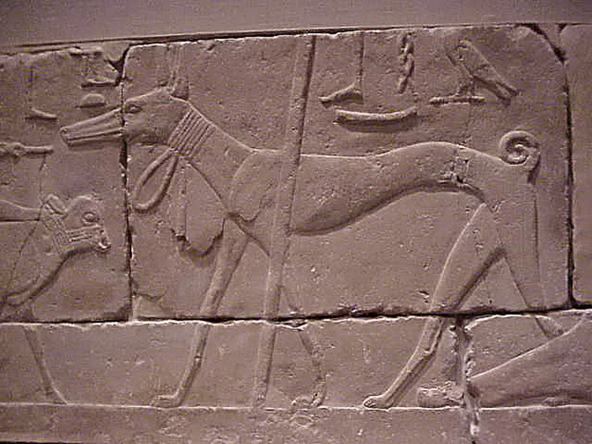 An acient Egyptian dog.