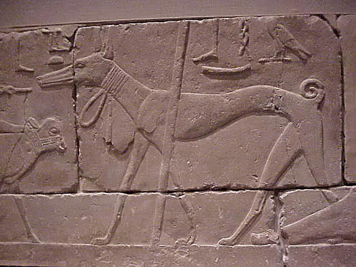 An ancient Egyptian dog.