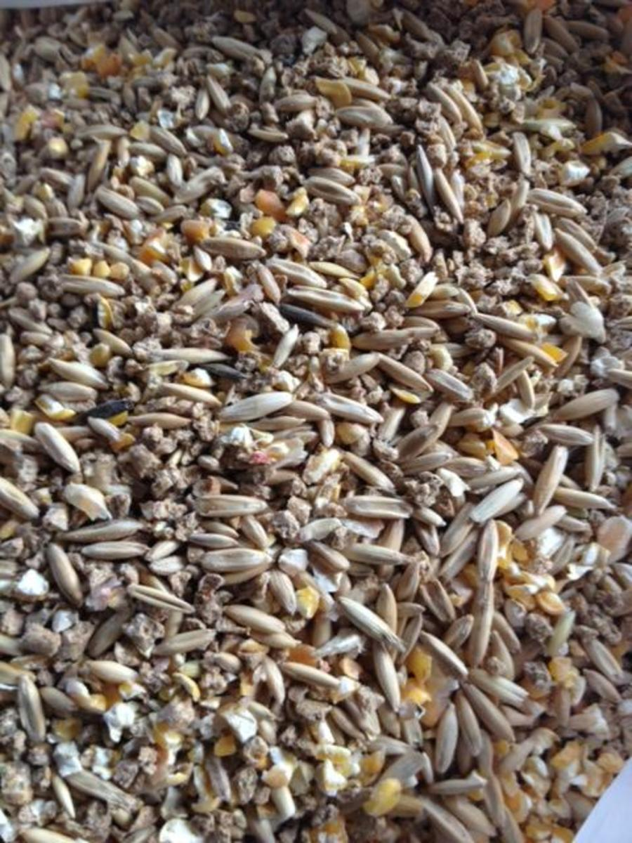 I feed my chickens a mixture of their normal feed, non-GMO cracked corn and whole oats in the colder winter months.