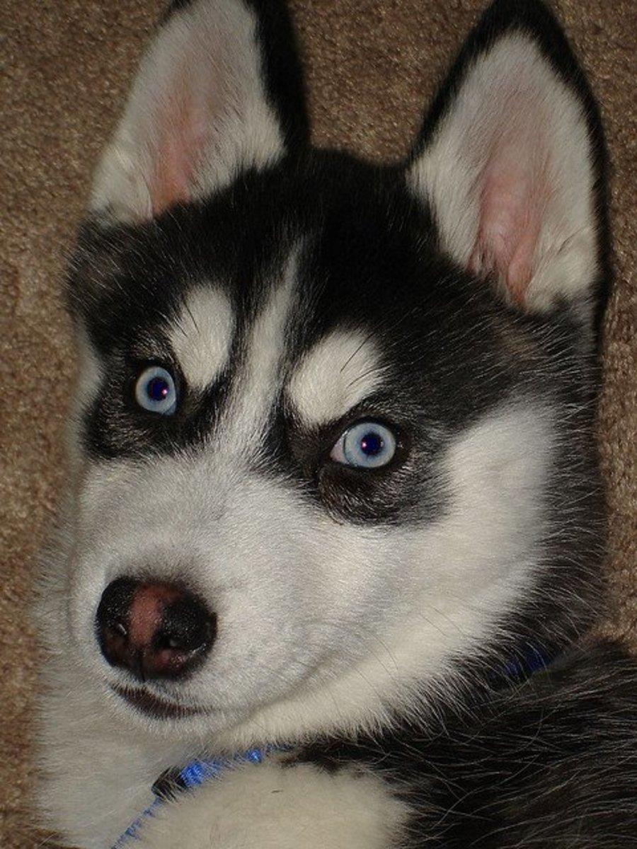 Look at those beautiful eyes