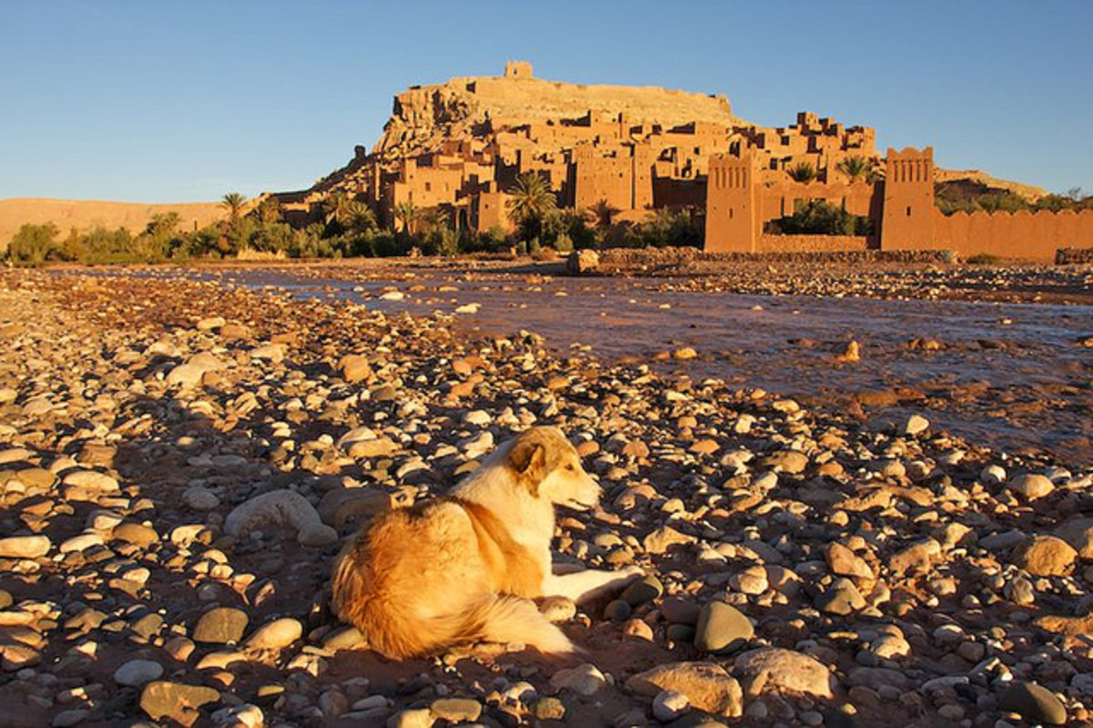 This dog is resting in front of Ait Ben Haddou, Ouarzazate.
