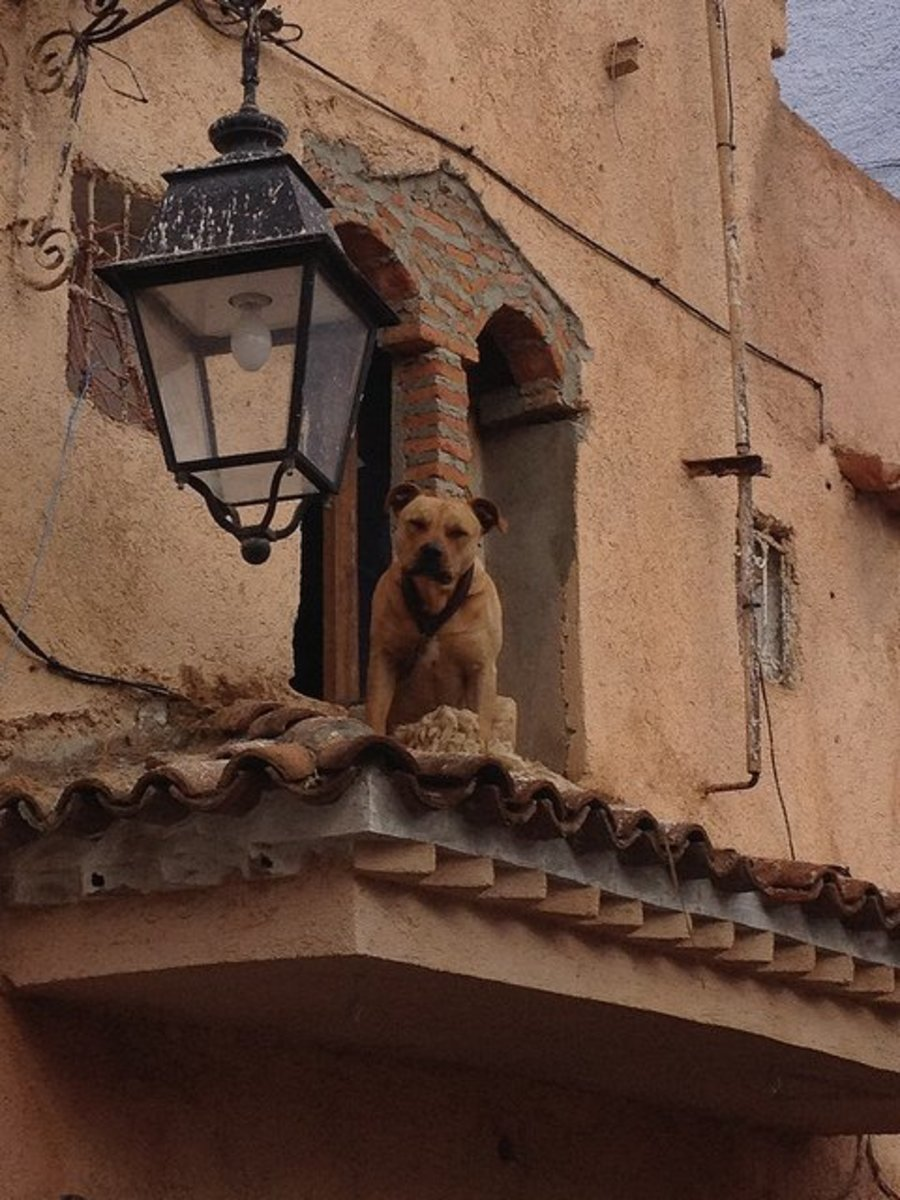 Another urban dog in Morocco.