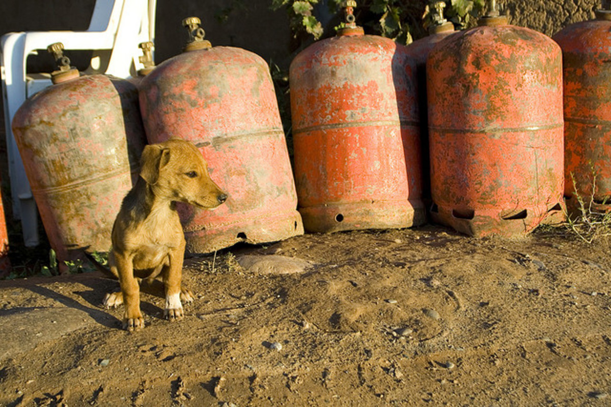 A guard-dog-to-be in Morocco.