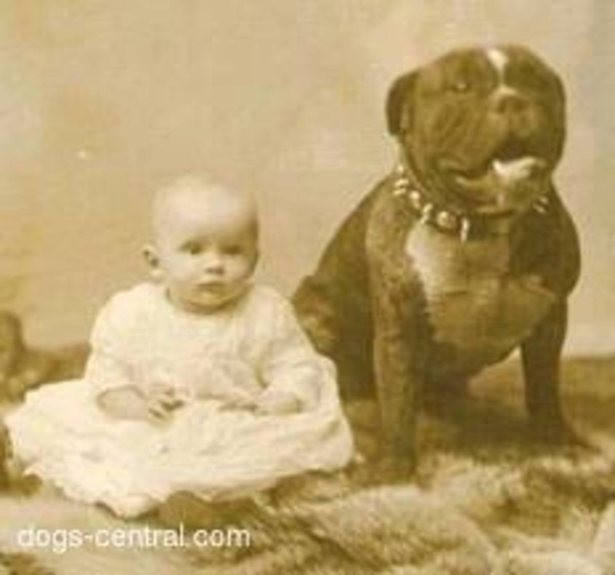 """In the early 1900s, the Pit Bull was known as """"The Nanny Dog"""""""