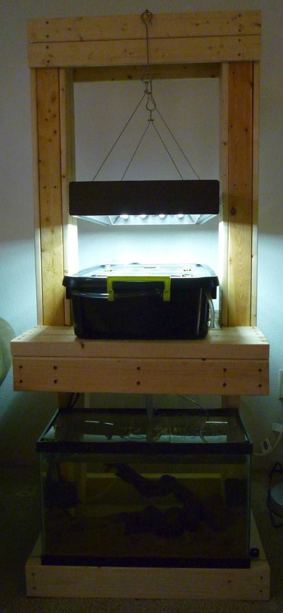 Ten Gallon Aquaponic Setup.