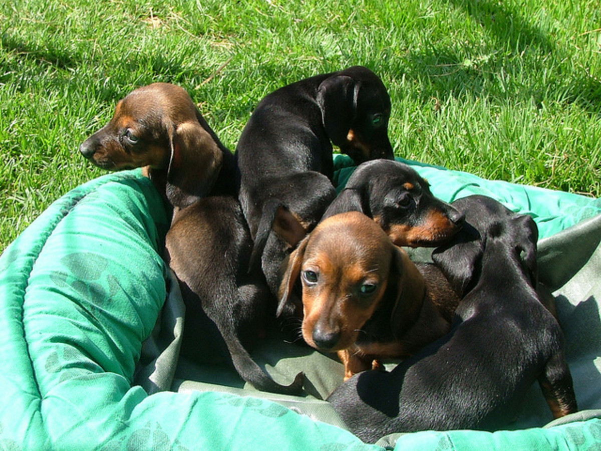 Great Dog Names From Germany For Males And Females Pethelpful By Fellow Animal Lovers And Experts