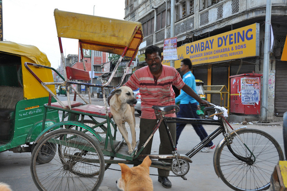 An Indian dog out for a special ride.