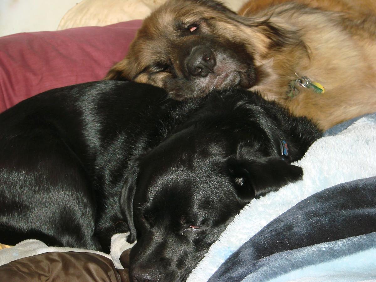 Misha, my Labrador Retriever, and a healthy Ryan