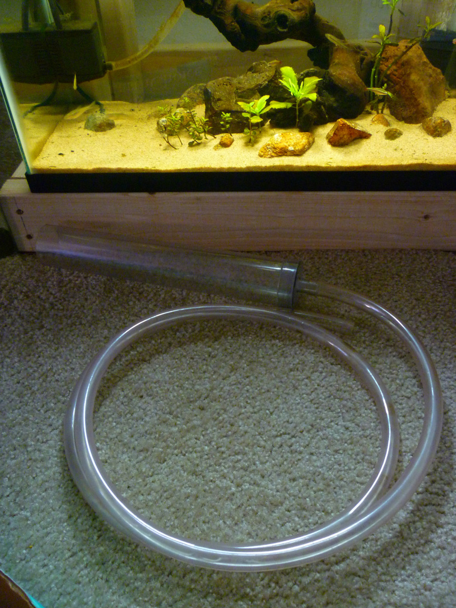 An aquarium gravel vacuum or siphon is essential for water changes.