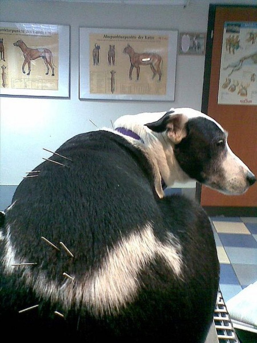 Acupuncture may help in some cases.