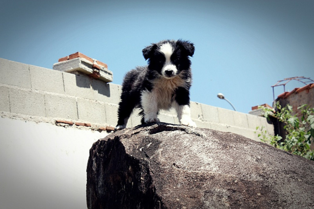 Active dogs, like this Border Collie puppy, deserve outgoing names.