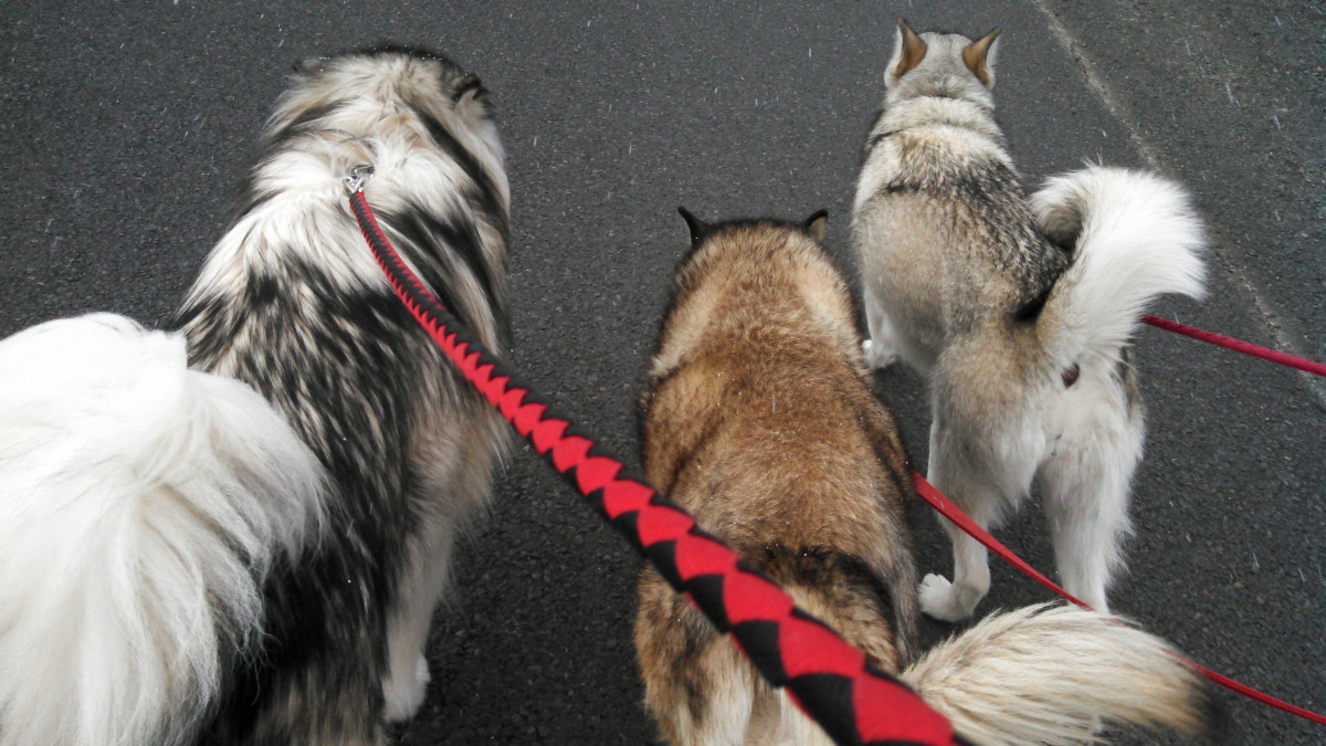 No matter how you do it, you can prevent leash pulling.
