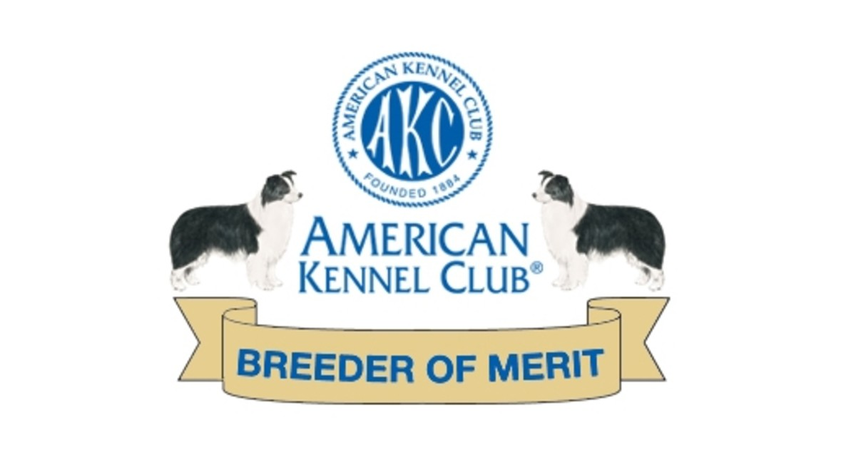 Sample AKC Breeder of Merit Banner