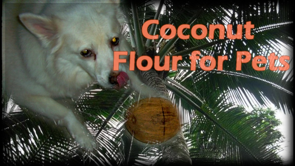 The Benefits of Cooking with Coconut Flour for Pets