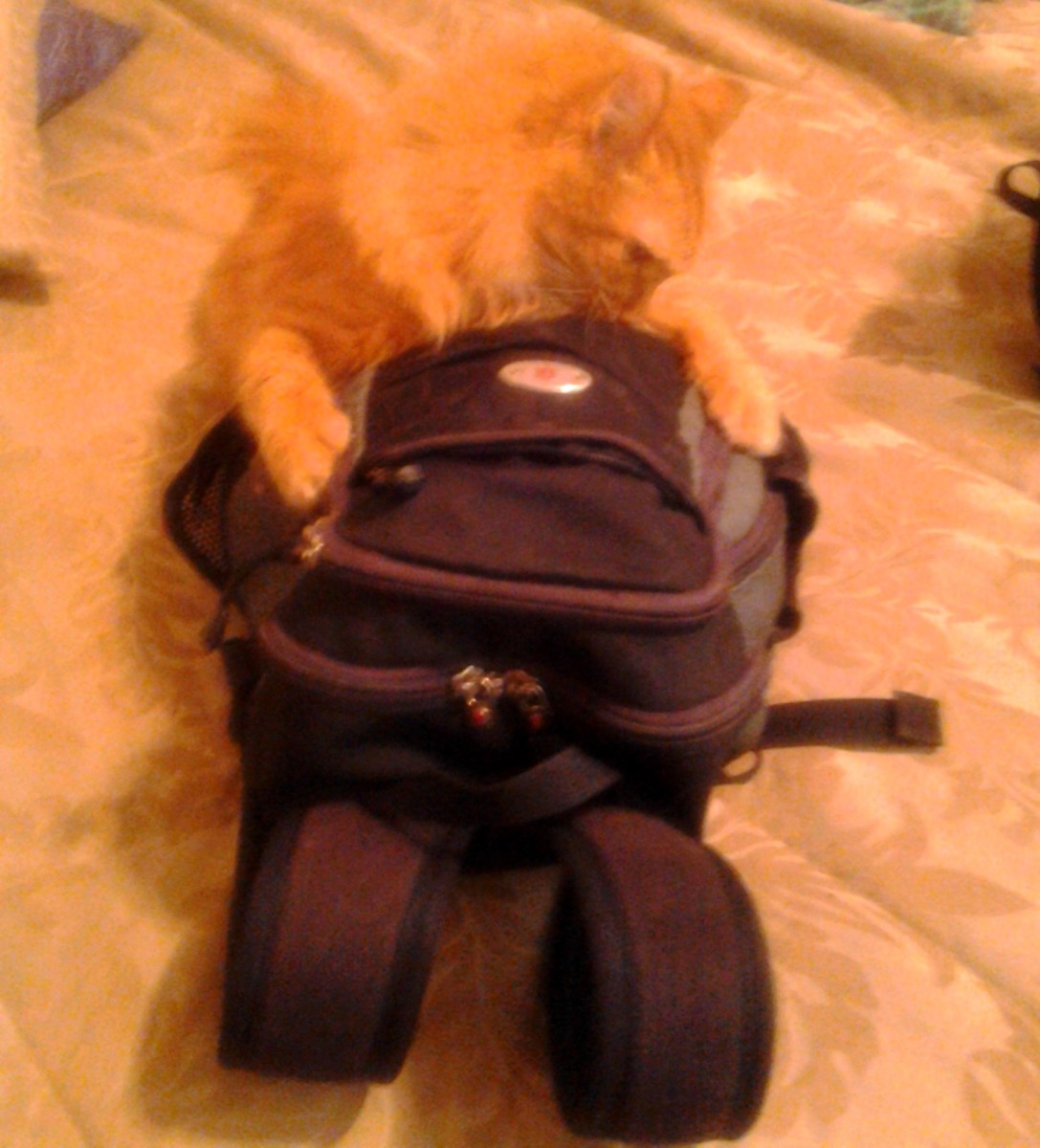 If I destroy her backpack, Mama can't make me travel, right?