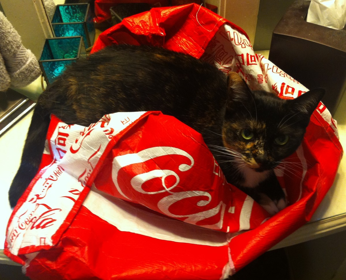 Cat laying on a bag.