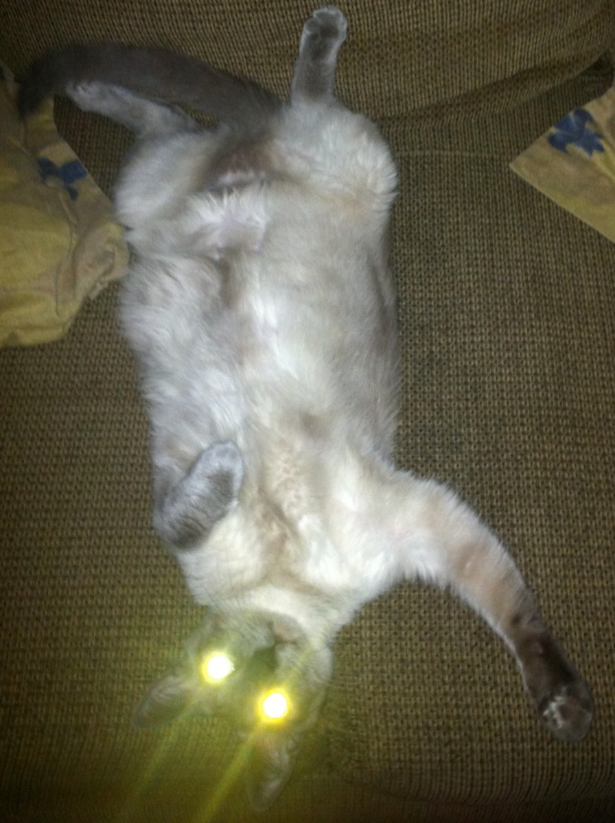 Cat lounging on her back on the couch.