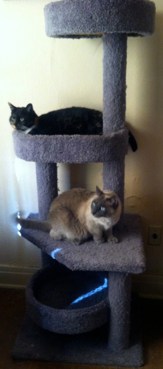 An upgraded cat tower for my cats.