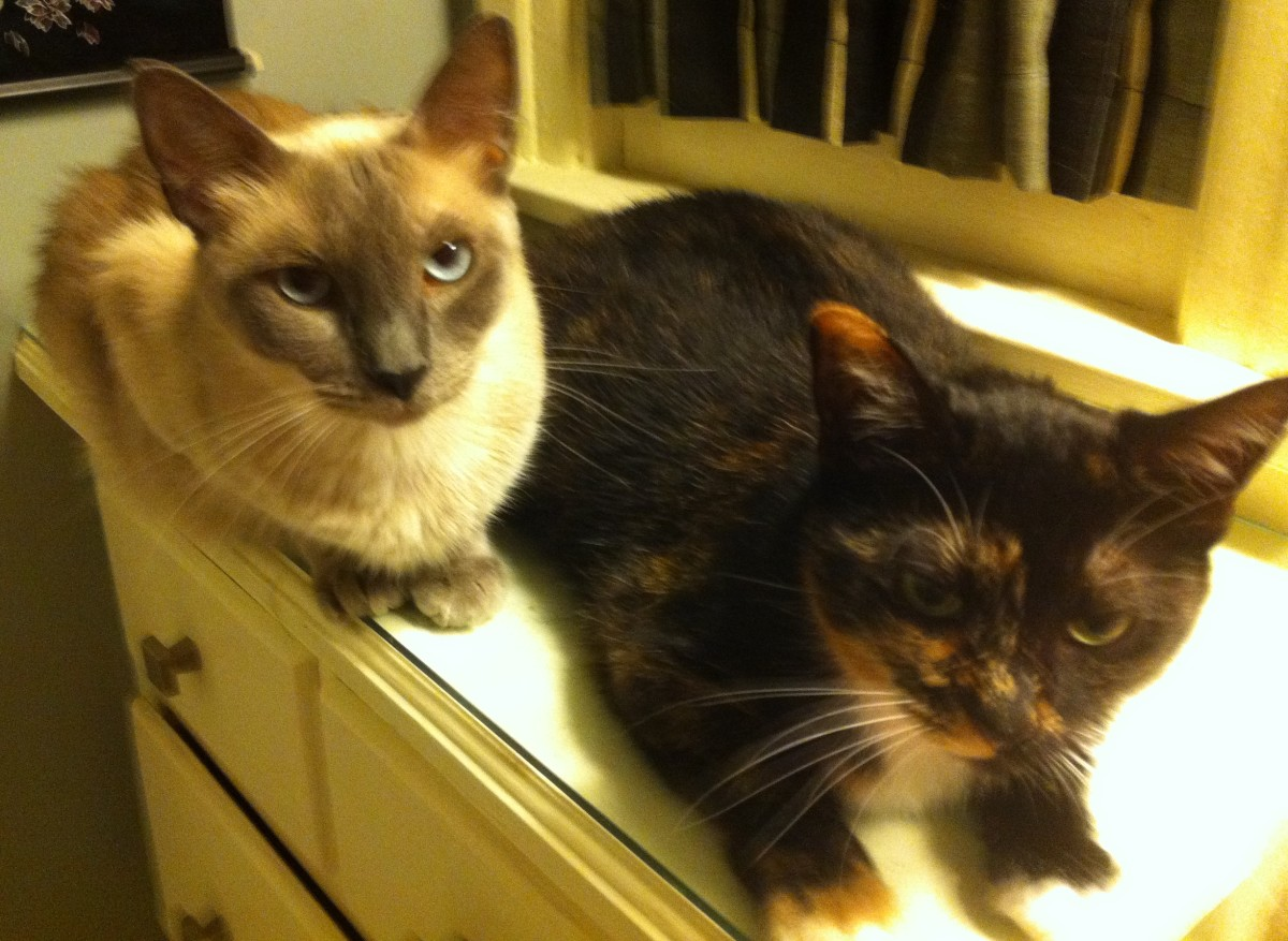 These two cats hated one another when they first met, but now they are close friends.
