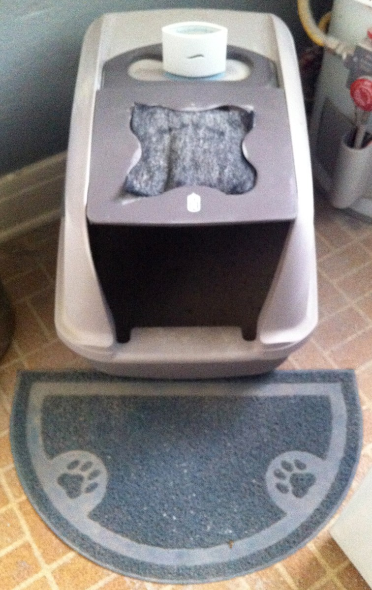 Cats like a clean and private litter box, so ensure you clean it out often.