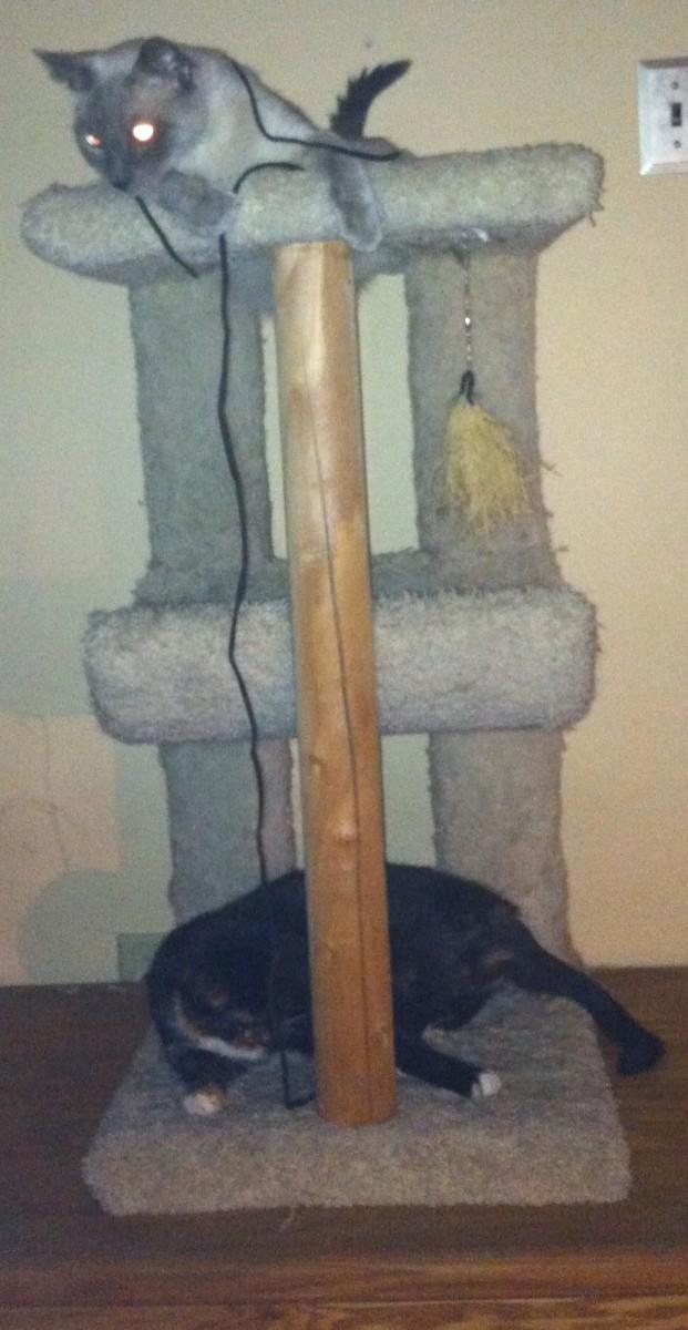 Both cats enjoying a cat tower.