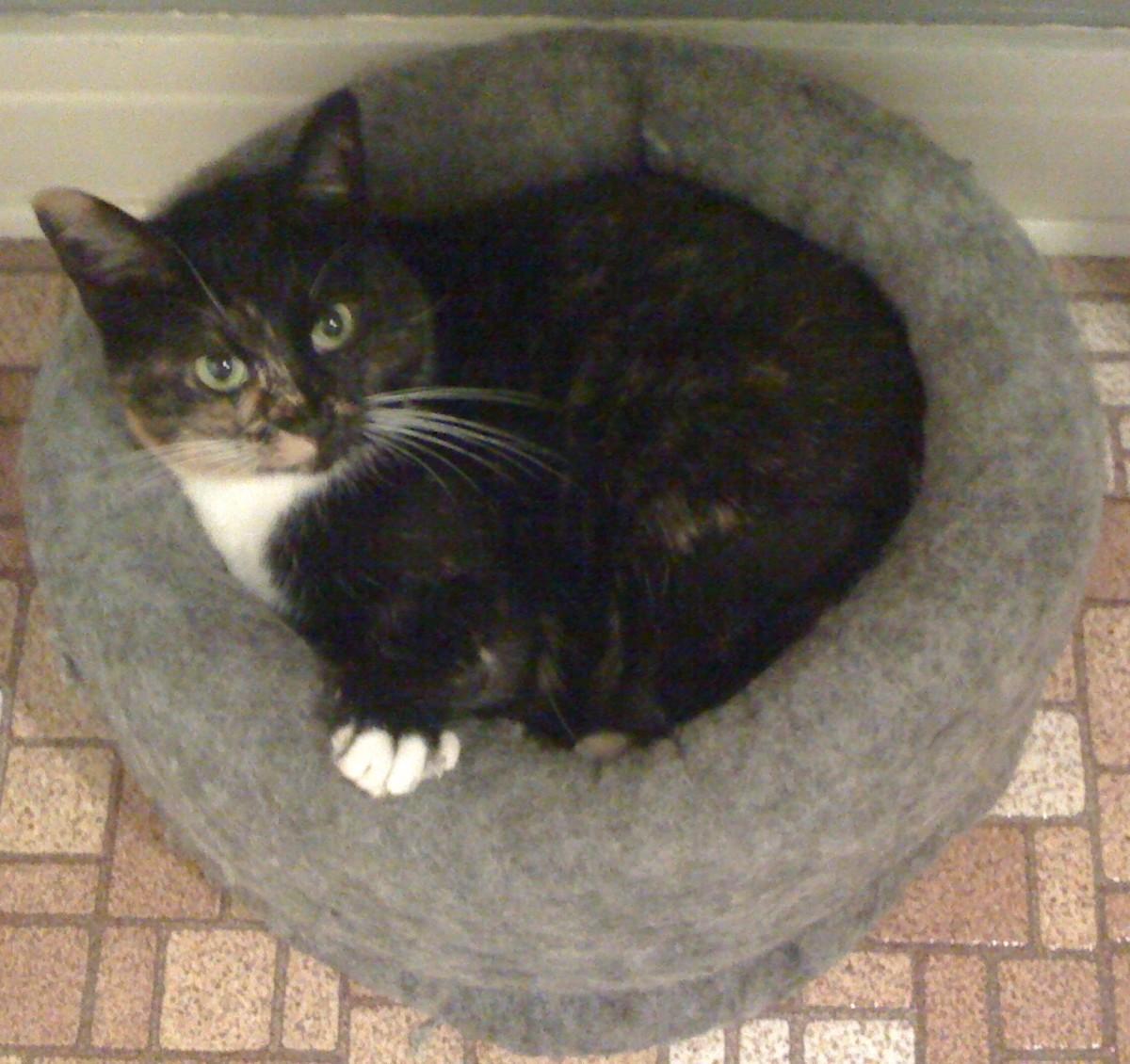 Cat enjoying a cat bed.