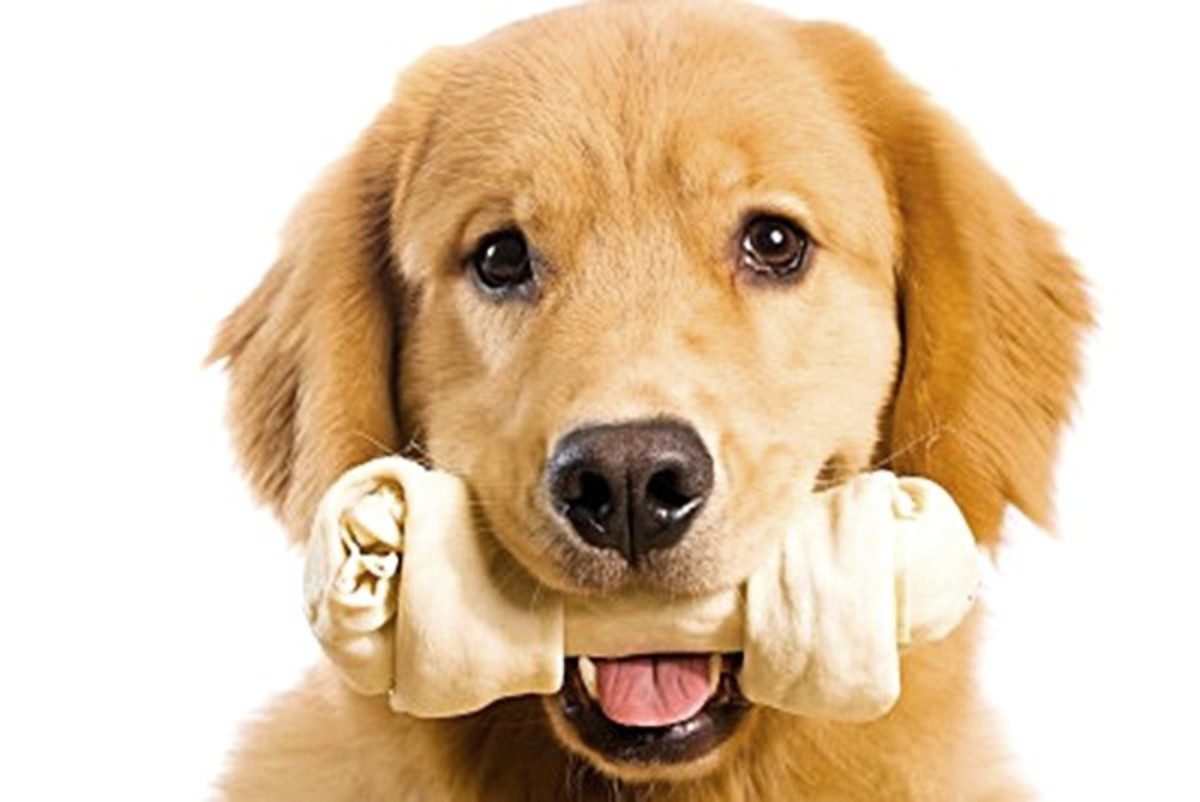 Dogs love their treats but is rawhide bad for them?