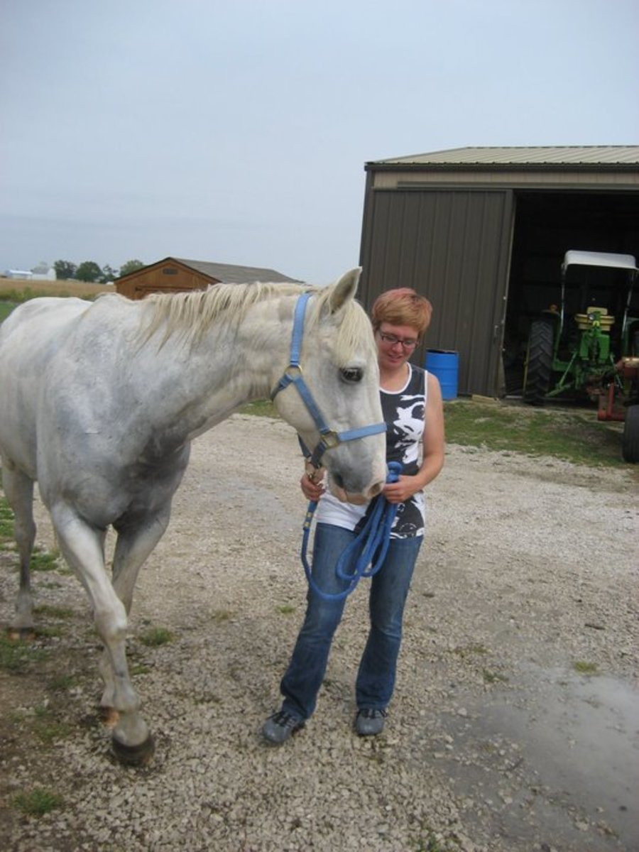 Letting a horse get a good whiff of you before you start petting or feeding him is a good idea. Just make sure the horse isn't prone to biting first!