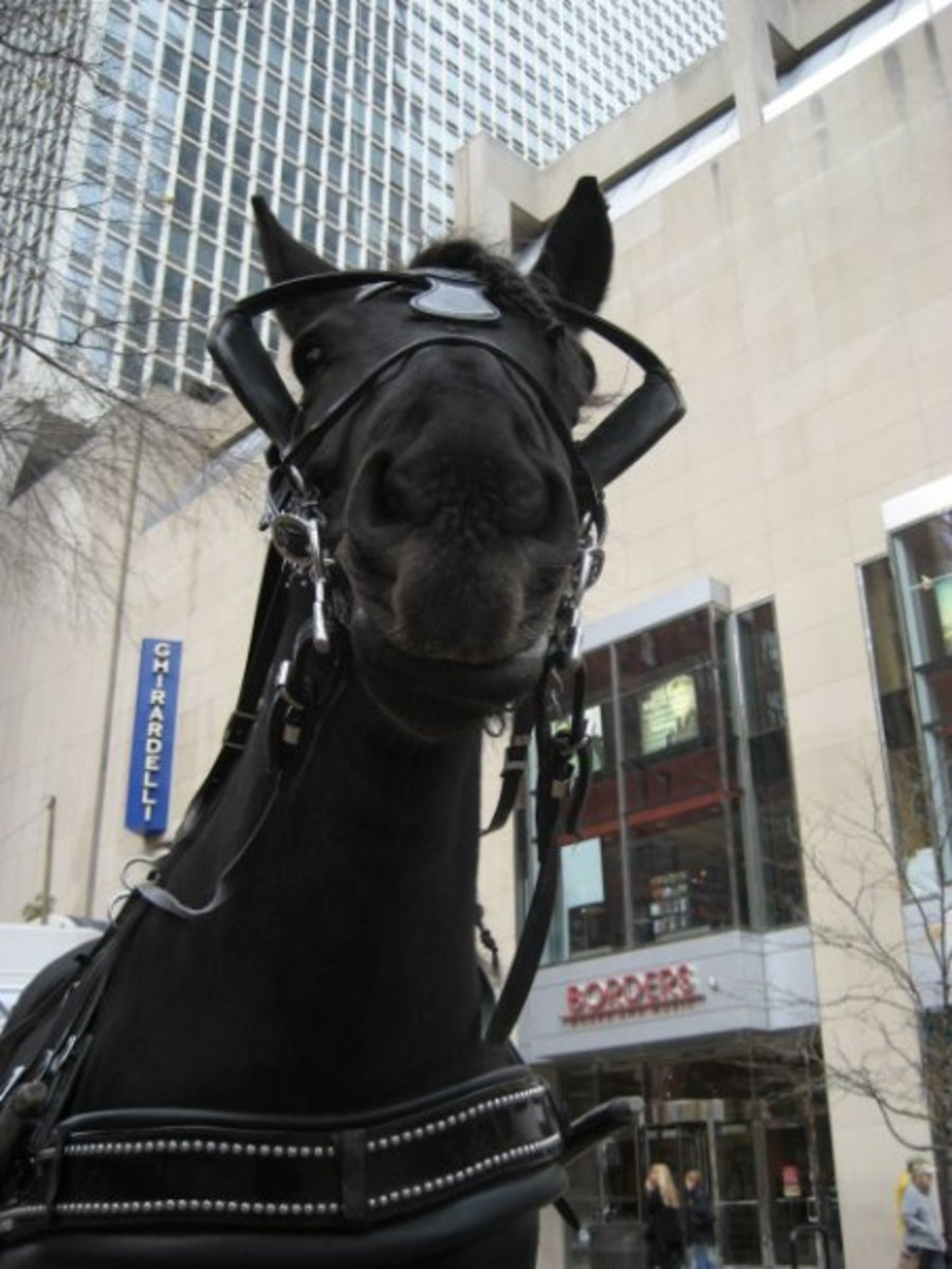 Horses can make all sorts of faces. Learn how to read their expressions by spending all the time you can with them.